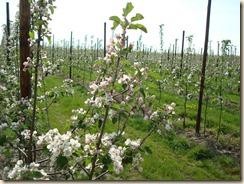 fruitplantage