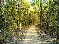 Kanha Road5.jpg