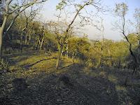 Kanha Forest4.jpg