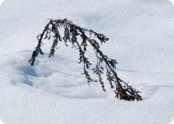 фото Тверская ливневка