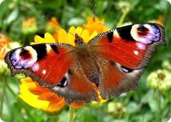 фото Бабочки под контролем