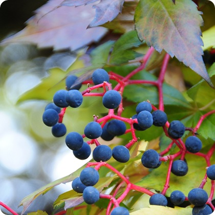 josette treeweb