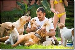 Johnny e seus cães: ele tem três Pit Bulls, dois Parsons Russel Terriers, um Dogue de Bordeaux e um Chihuahua (sete no total).