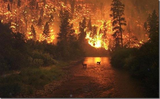 Incendio%20forestal%201