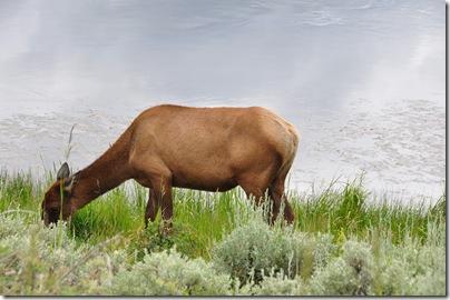 Yellowstone 2009 094