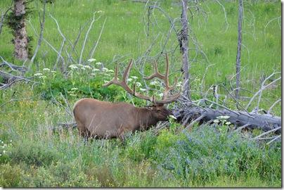 Yellowstone 2009 208