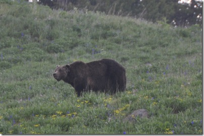 Yellowstone 2009 273