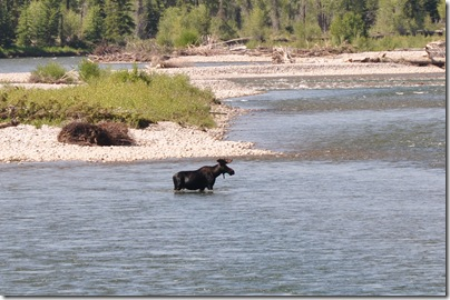 Yellowstone 2009 109