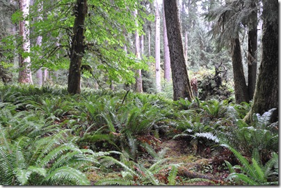Hoh Rain Forest 065