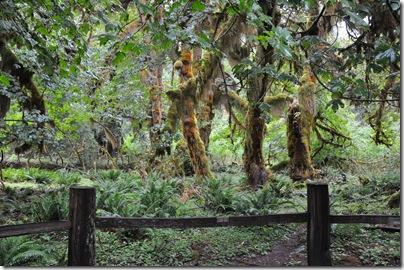 Hoh Rain Forest 044