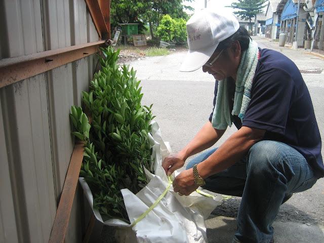 雲林時光-金桔樹苗栽種 (目前已經沒有種植金桔樹囉! 感謝大家支持)