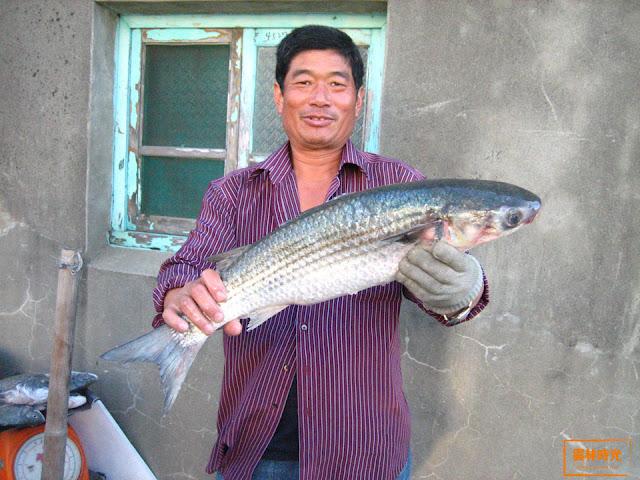 雲林口湖景點~ 雲林最西端的台子村漁港!
