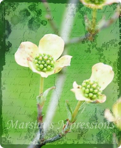 dogwood bloom edited w green & black texture w words 70 copy w watermark