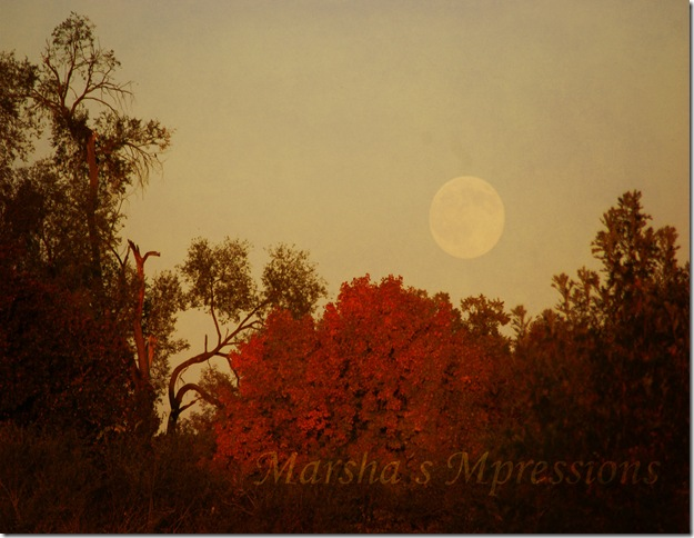 full moon rising yams soft light darkened w watermark copy