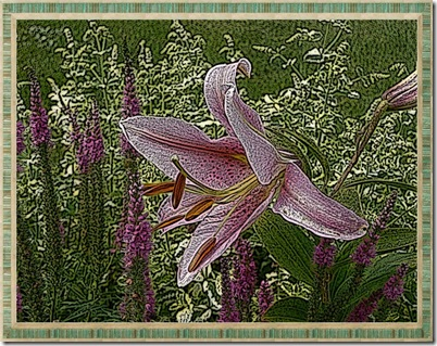 lilies 005 (800x600)