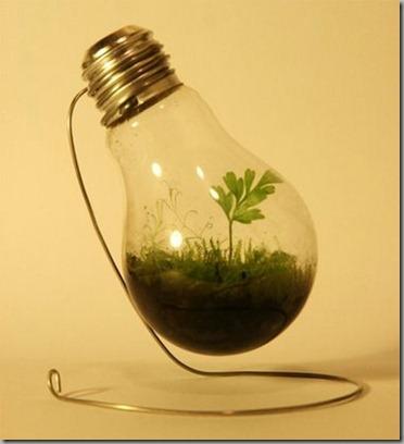 plantpot7