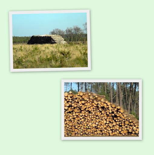 le bois par terre