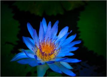 Blue Hawaii-IMG_3129