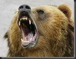 Bear LR