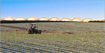 Baja Farming