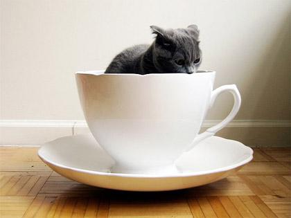 mug-cat.jpg