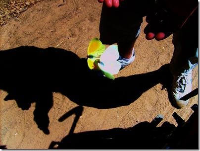 coppia di farfalle a Porquerolles