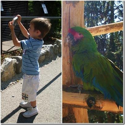 pappagalli a Minitalia Leolandia