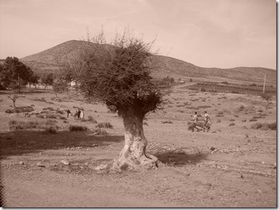lungo la strada per Ouzoud