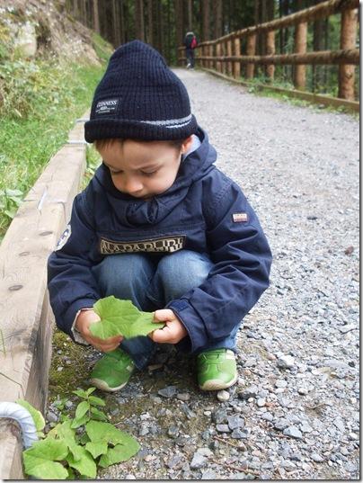 a raccogliere tesori d'autunno