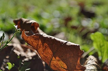 autunnoDSC_0930