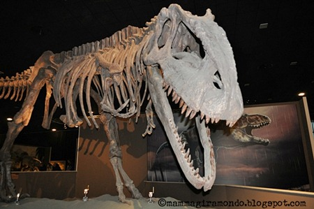 Dinosauri della PatagoniaDSC_1189