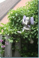 na ogrodzeniu1