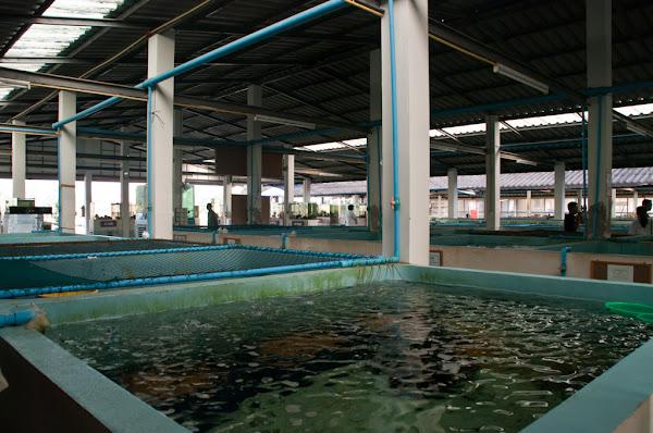 Аквариум в Ао Нанге
