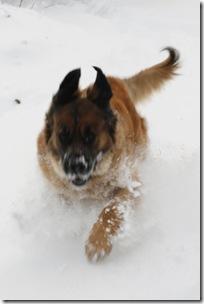 Lovis i snö 4
