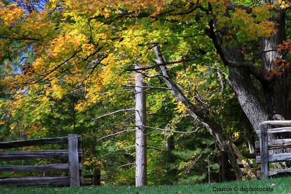 IMG_8600 Autumn_2