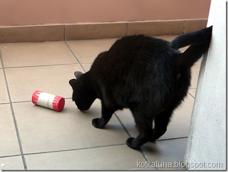 zabawka_dla_kota_3