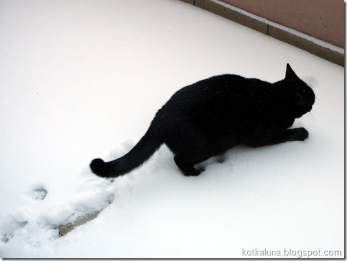 luna_snieg-2