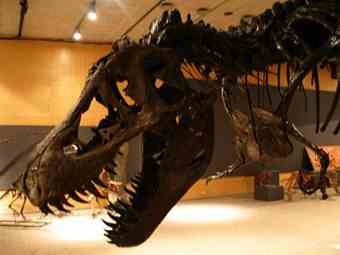 'World of Dinosaurs' exhibition at the Cranbrook Institute of Science