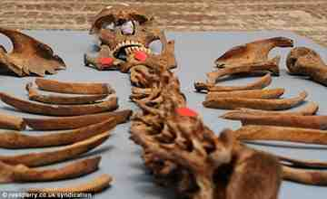 L'analyse d'un squelette à York Article-1337555-0C6E06CD000005DC-867_634x388_thumb%5B3%5D