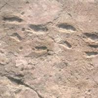 Laetoli footprints dating services