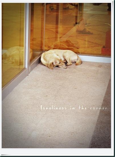 dog corner-20100823-153219