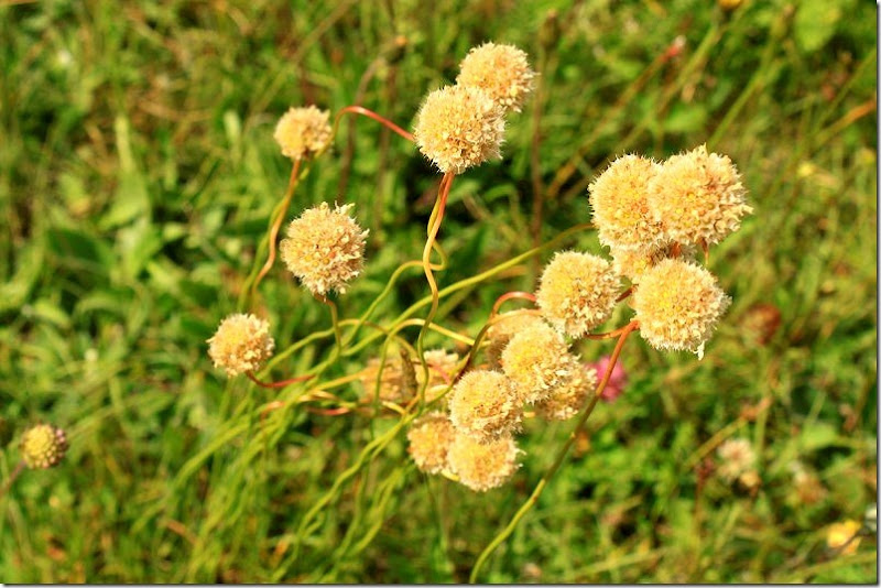 la fiorita- monte vetore 050 []