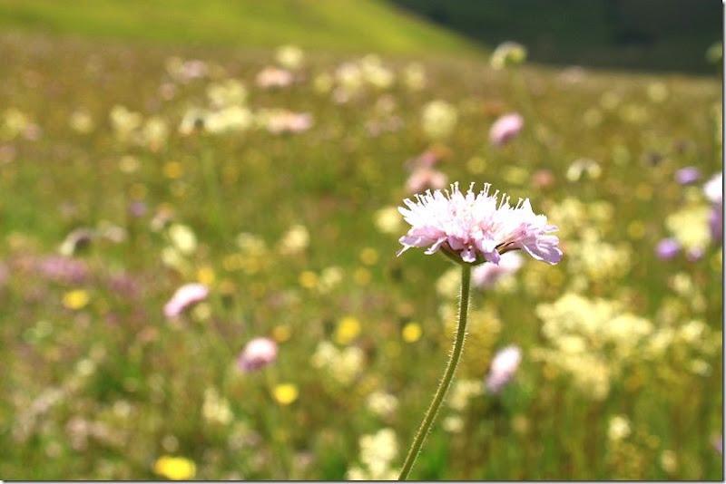 la fiorita- monte vetore 053 []