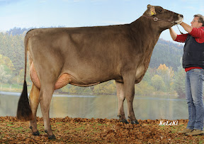 brown suisse.jpg