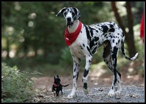 jagdeep1984__big-dog-small[1]