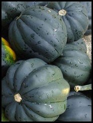 squash AcornSquash