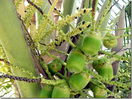 Abelhas arapuã