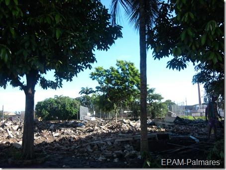 Vista lateral com o Pau-Brasil