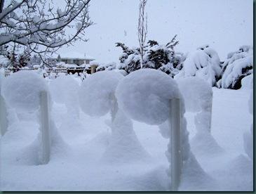 snowpops
