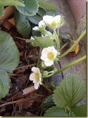 April 2010 369